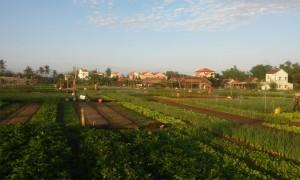 Tra Que Herb Village 1